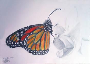 Monarchfalter by FurkanHolmes