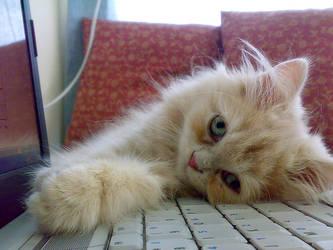 Aaahhh I'm so tired