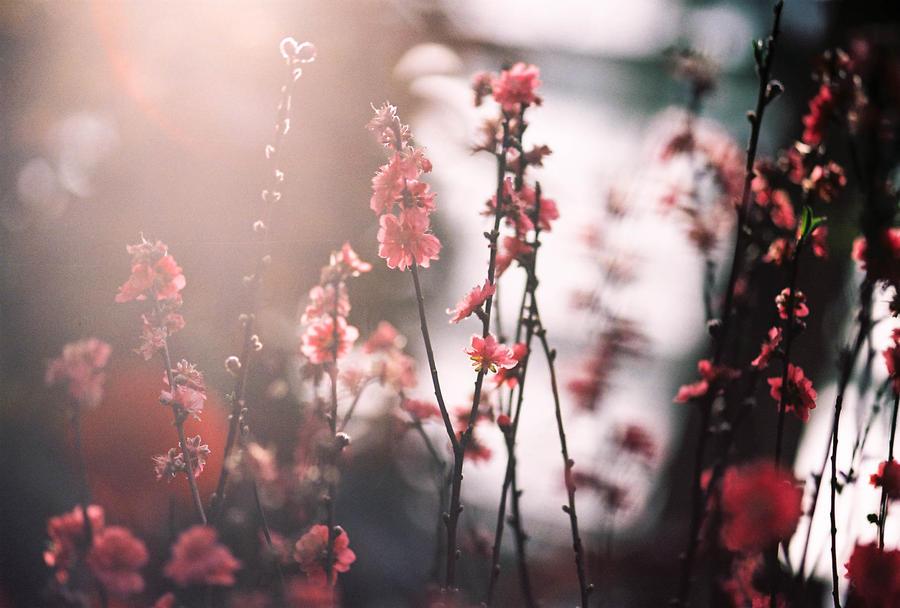 Illuminated by sassystrawberry