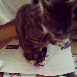 Strange cat by krindoness