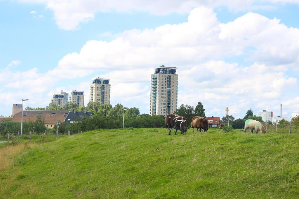 Flats and sheep Holland by slingeraar