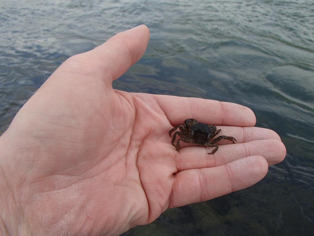 Small crab in hand by slingeraar