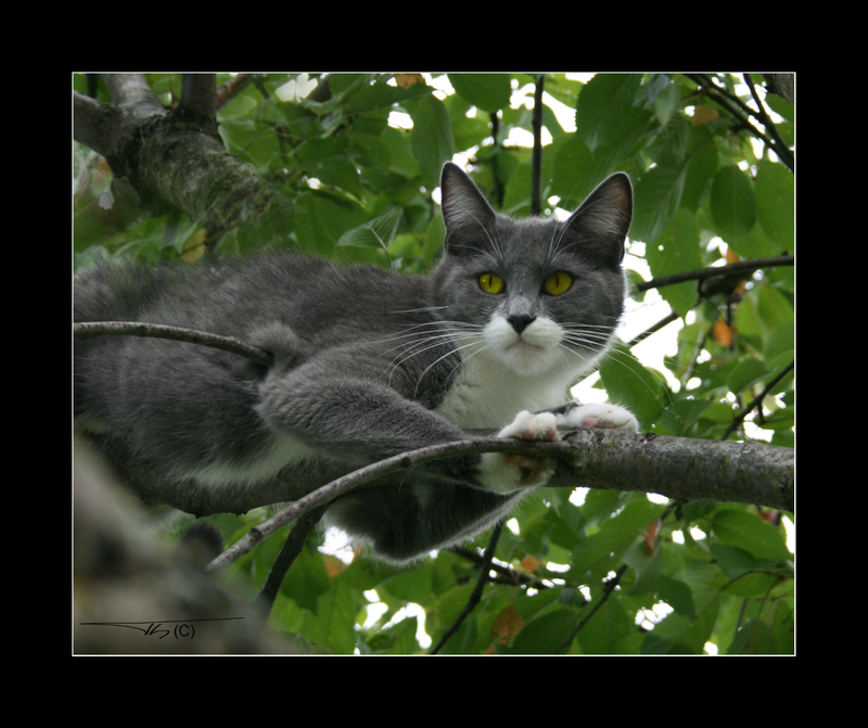 Cat in the tree... by th-08