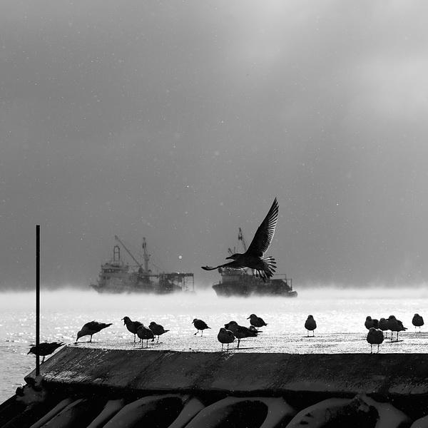 fishers II by arslanalp