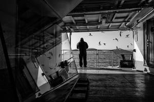 gull by arslanalp