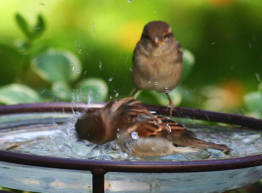 Splish-Splash by BirdyLee