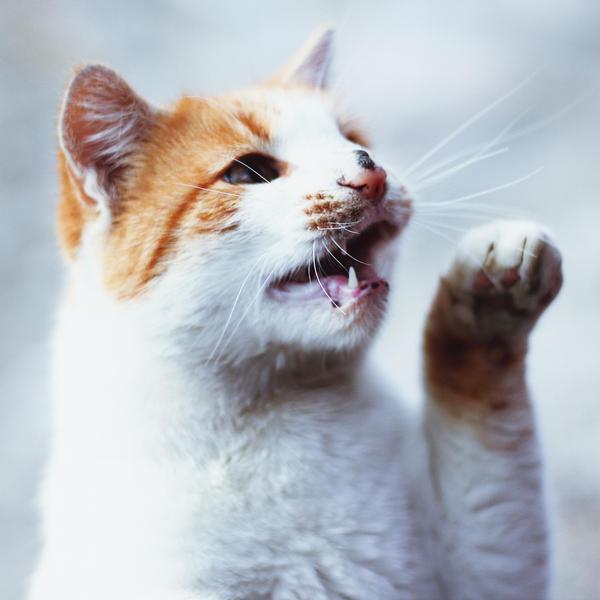 Mr. Cat by RainOfLove
