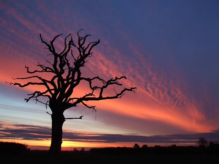 THE Dead Tree again by AlicesPlace