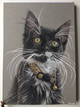 Kitten, coloured pencil