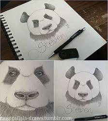 Panda Steven