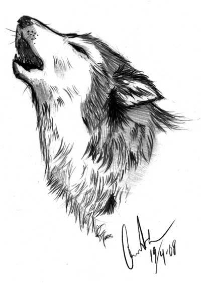 Simple howling wolf sketch - photo#19