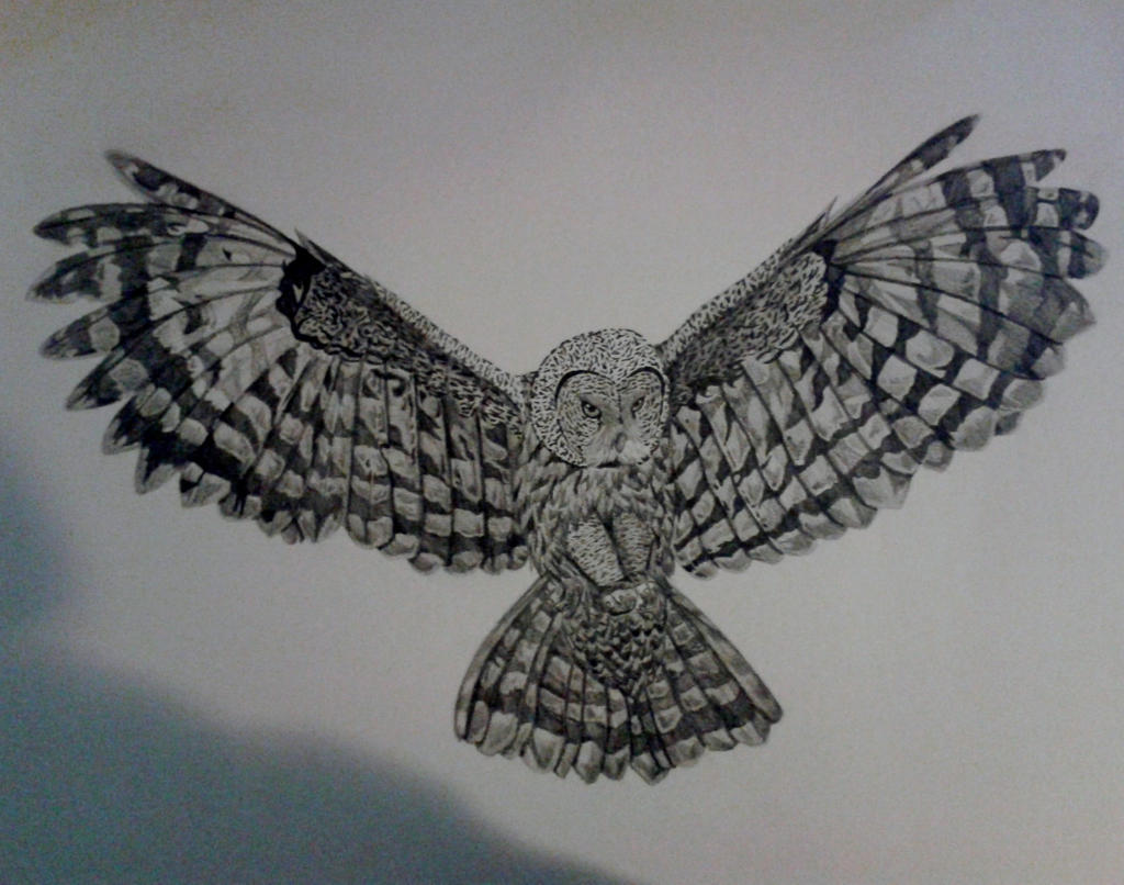 Flying owl pencil drawings - photo#9