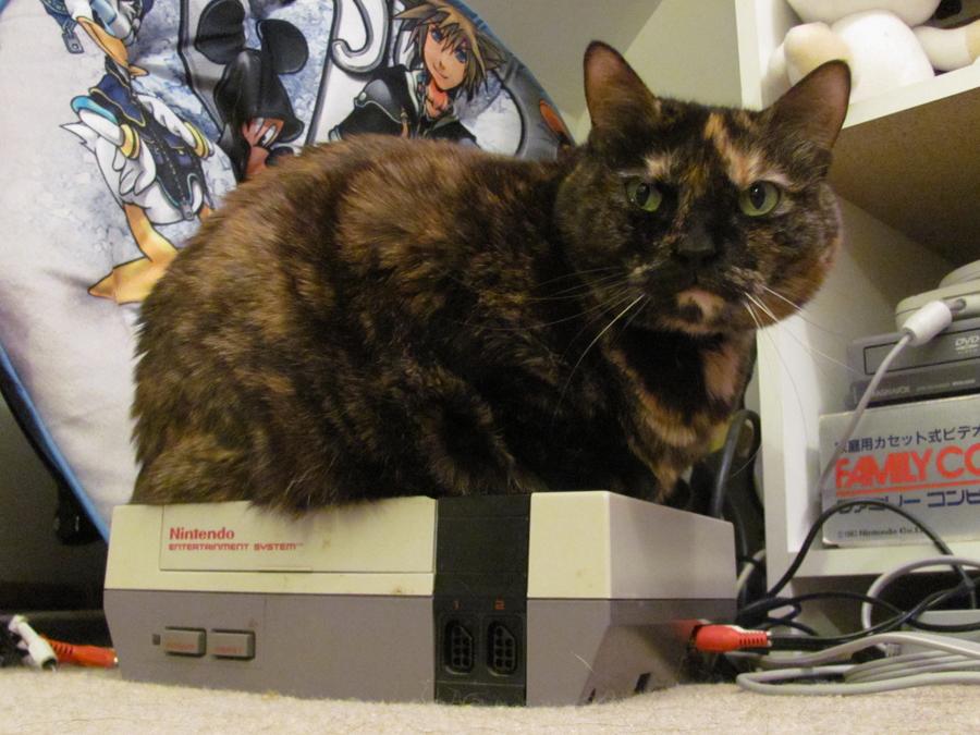 My NES has a Bug by Nyaasu