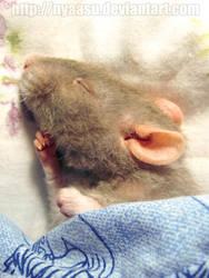 Sleepy-head by Nyaasu