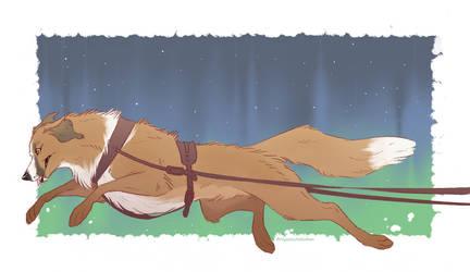 Lead Dog Buck