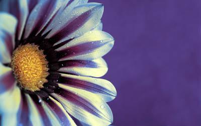 .:Flower:. V by Loki2002