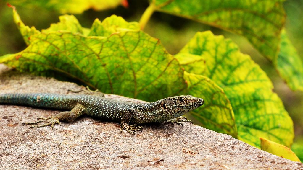 .:Reptile:. II by Loki2002