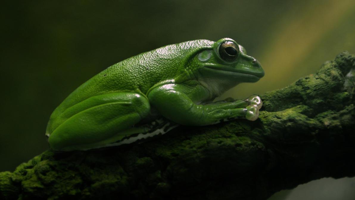 .:Frog:. by Loki2002