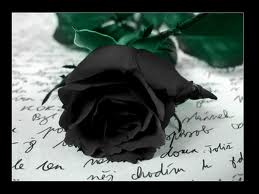 Black Roses by BlackStar2442