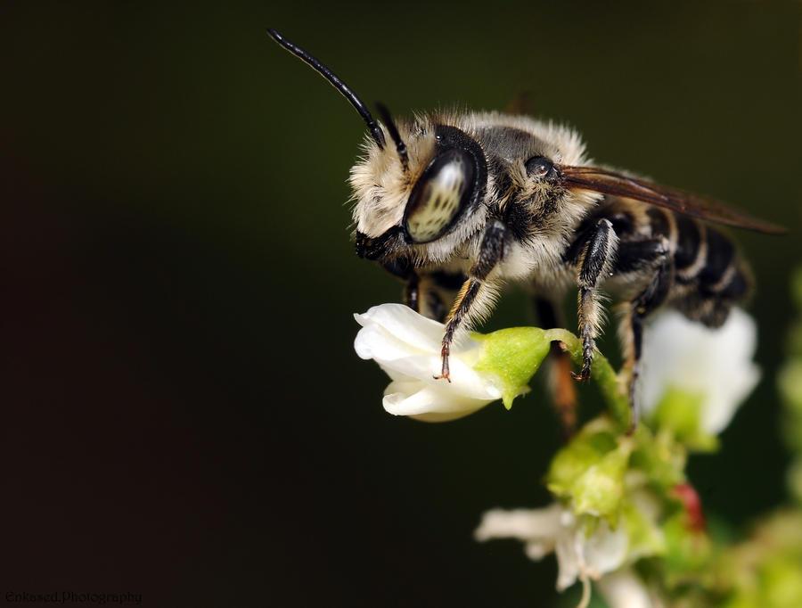 Black Bee Portrait by Enkased