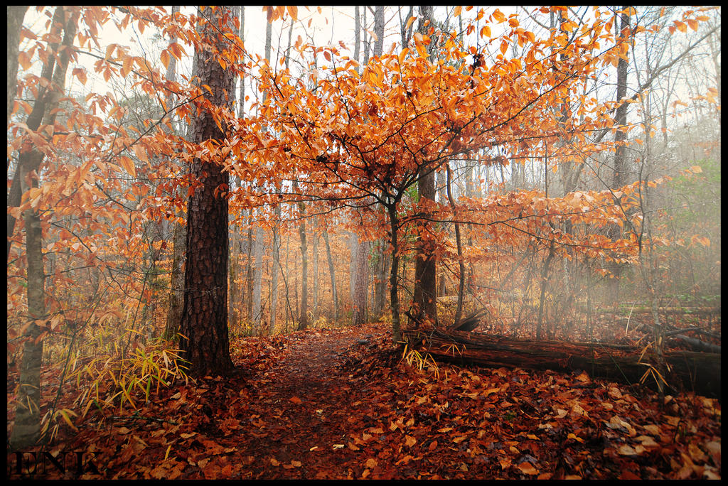 Foggy Trail by Enkased