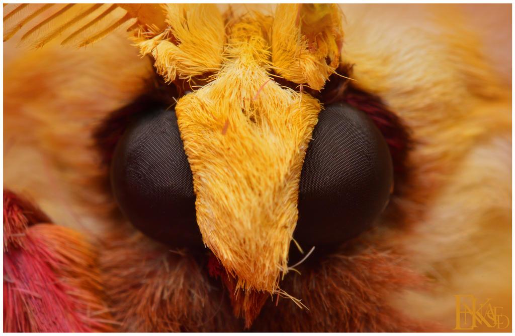 Luna Moth Mugshot by Enkased