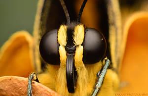 Giant Swallowtail by Enkphoto