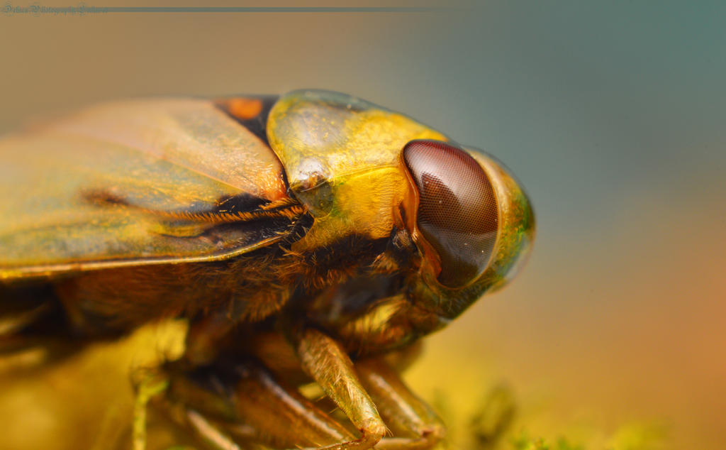 Unidentified fly by Enkphoto