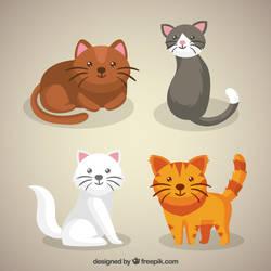 Cute Kitten Pack