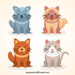 Kitten Pack