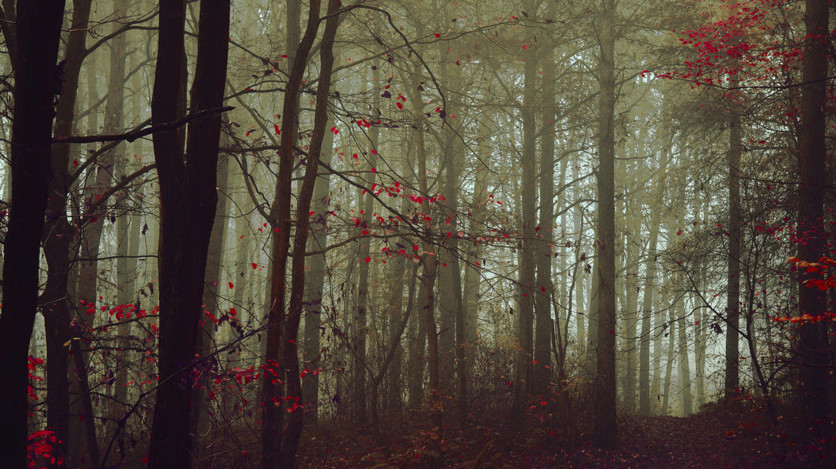 Into the trees by kriskeleris