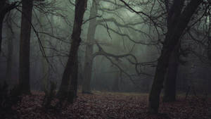 Sleepy Hollow by kriskeleris