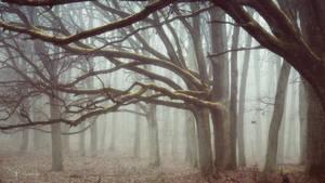 Forest of lost souls by kriskeleris