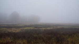 Fields of Dead Meadow