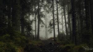 Wandering the dark paths