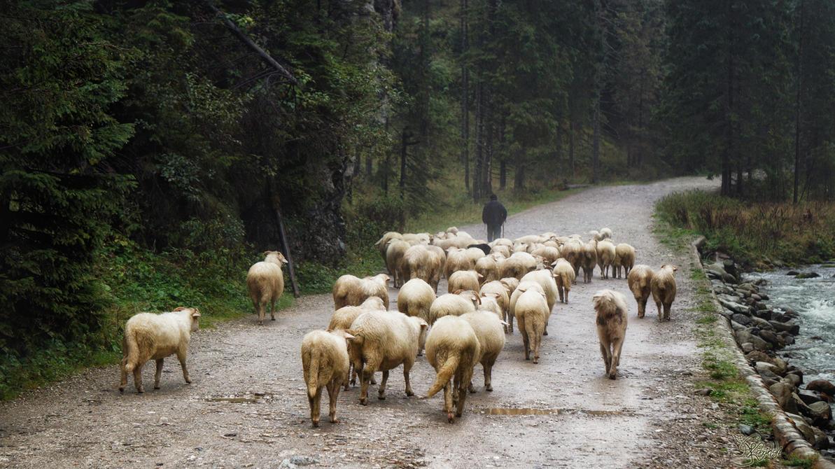 Where the shepherd leads by kriskeleris