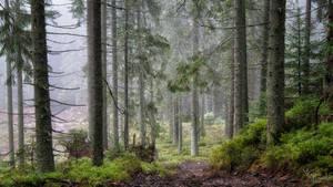 Native woodland by kriskeleris