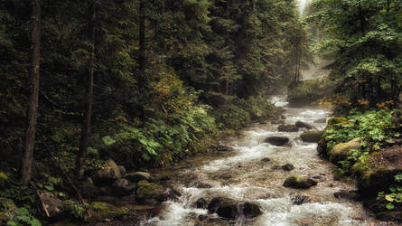 The vein of a mystical forest by kriskeleris