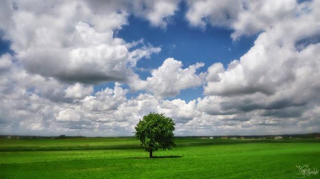Green fields of yesterday