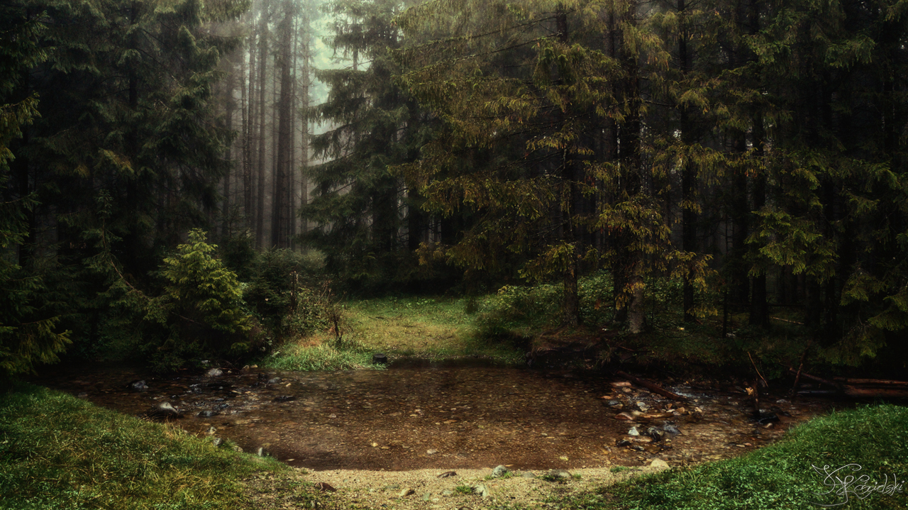 On the border of the forest by kriskeleris