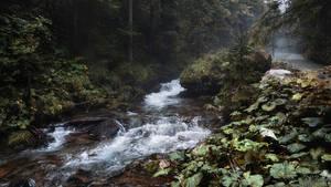 Where flowing creek brings tales of a grim forest by kriskeleris