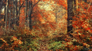 A walk through the painterly forest