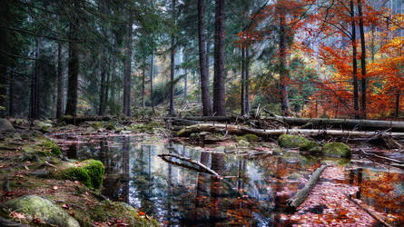 The fantasy of nature by kriskeleris