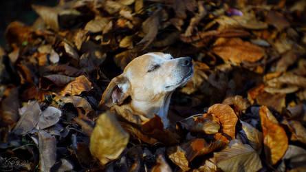 Comfortable autumn