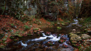 Charm of a canyon stream
