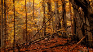 The yellow forest rustled poetically