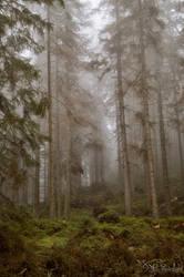 In a slumbering Tatra forest