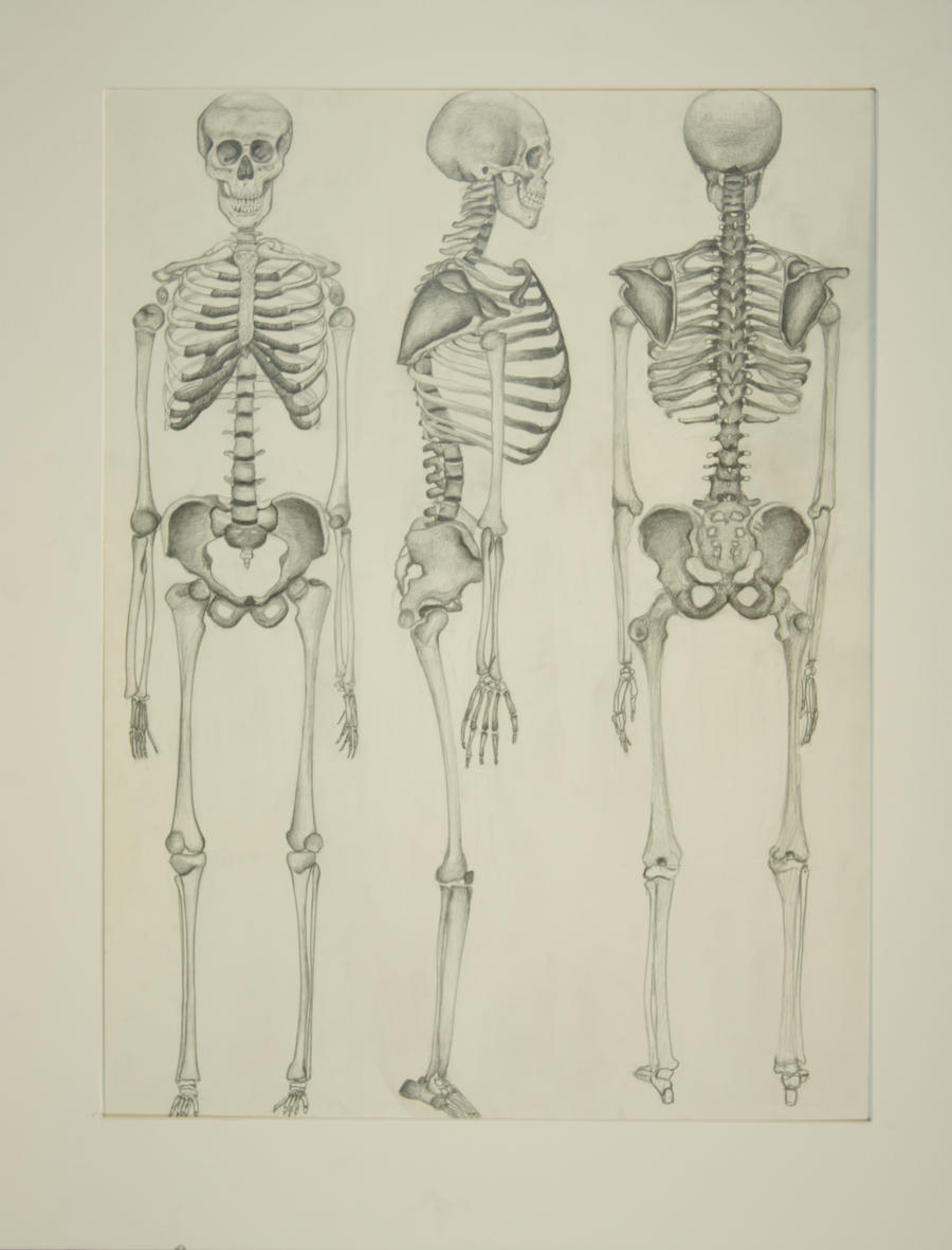 how to draw skeleton parts