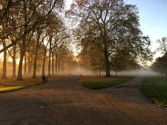 fog by FragileReveries