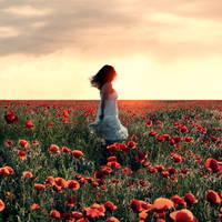 poppy field by photoflake